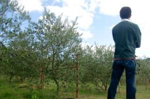 オリーブ農家